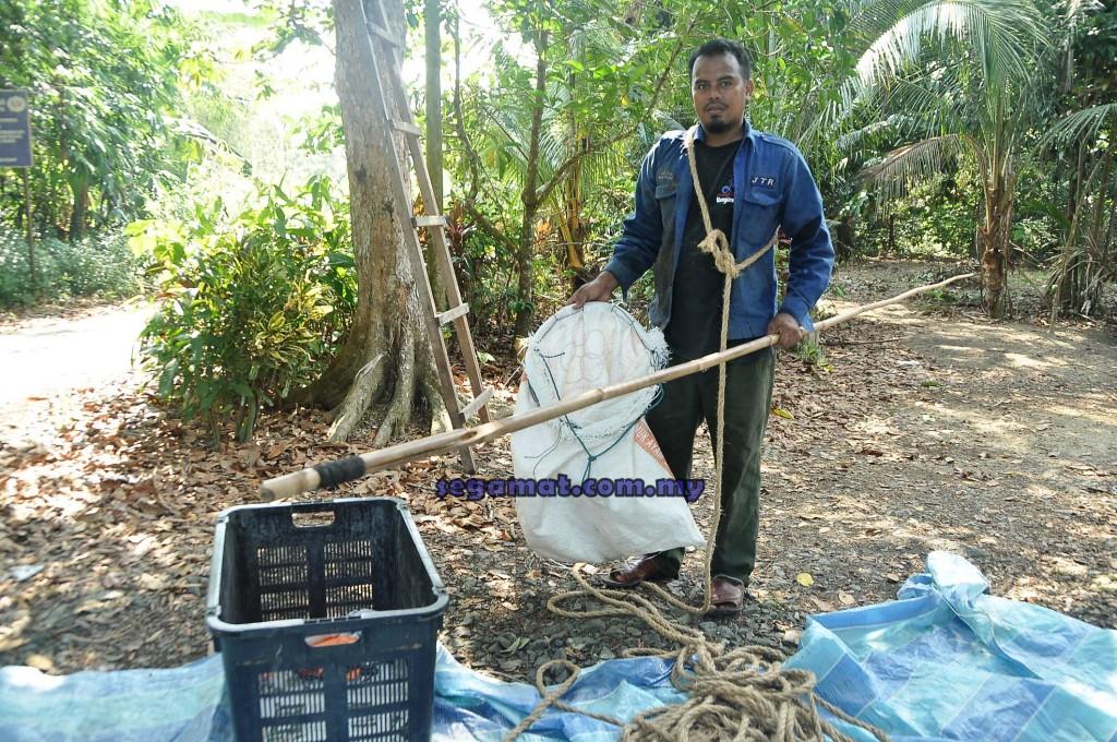 Suhaimi menunjukkan peralatan asas seperti galah, tali dan karung guni yang diperlukan untuk memetik buah mata kucing